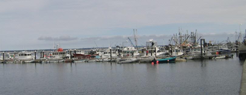 Sea Peach BioScience - Homestead Business Directory